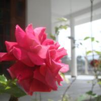 Fotografie hotelů: Villa Di Sara, Bandarawela