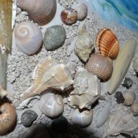 Hotelbilleder: Kela's Seashell Studio, Vlorë