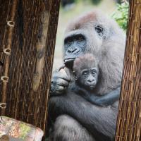 Hotelbilleder: Neushoorn en Gorilla, Wilsum