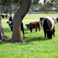 Hotel Pictures: Sandy Lake Farm, Gingin