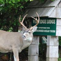 Zdjęcia hotelu: Wild Edge Lodge, Ucluelet