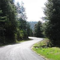 Fotos do Hotel: StayApart Glen Forest Inn, Shimla