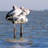 Hotellikuvia: Pelican Perch Retreat, Meningie