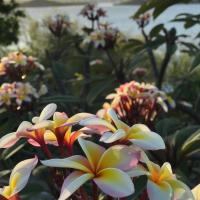 Фотографии отеля: Blue Bay Antigua, Seatons