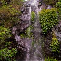 Hotel Pictures: Nimbin waterfall Retreat bedsitter, Nimbin