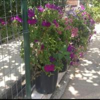 Fotografie hotelů: Vila Bamatati - Real Agrotourism home, Bajkaj