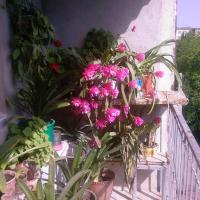 Φωτογραφίες: Бабушкин уют в РУСТАВИ, Rustavi