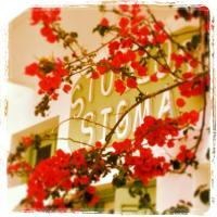 Фотографии отеля: Sigma Studios on The Beach, Наксос