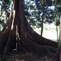 Jene Shobo Ecolodge Amazónico