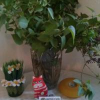 Hotel Pictures: Apartmán u Kočky, Blansko