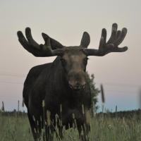 Photos de l'hôtel: Moose Garden, Orrviken