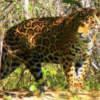 Hotel Pictures: Pousada & Camping Santa Clara -Pantanal Sul, Boa Sorte