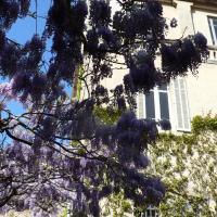 Hotel Pictures: Chambres d'hôtes Maison Auguste, Salon-de-Provence