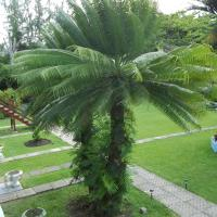 Hotel Pictures: Palm Garden Hotel Barbados, Christ Church