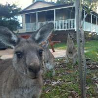 Hotel Pictures: Bush & Bay Cottage, Erowal Bay