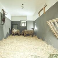 Hotel Pictures: Ferienhof Middenmank, Glaisin