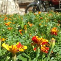Hotel Pictures: Tiebi Garden Hotel, Daocheng
