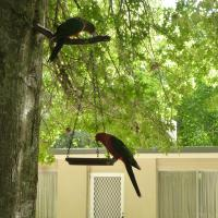 Two-Bedroom Apartment - Lorikeet Room