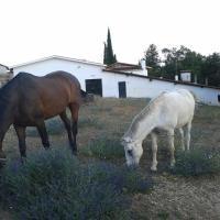 Hotel Pictures: Casa Rural La Vallejera, Tejeda de Tiétar