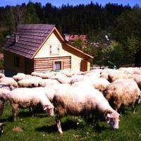Zdjęcia hotelu: Domek przy Olczyskiej, Zakopane