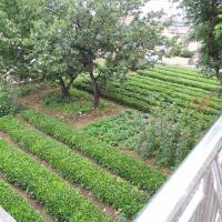 Hotel Pictures: Qingdao Farm Stay, Qingdao