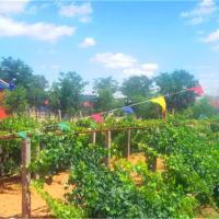 Hotel Pictures: Shapotou Damo Qingyuan Farmstay, Zhongwei
