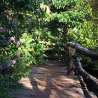 Foto Hotel: Tree Top Eco-Lodge, Banlung