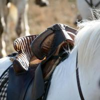 Special Offer - Double Room + Horse Riding