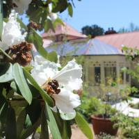 Hotel Pictures: Bethany Manor, Leura
