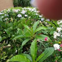 Hotel Pictures: Terrigal Secret Garden, Terrigal