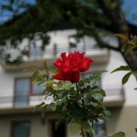 Hotel Pictures: Ferienhaus Sophie, Förolach