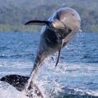 Фотографии отеля: Dolphin Bay Hideaway, Bocatorito