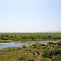 Pelican Shores