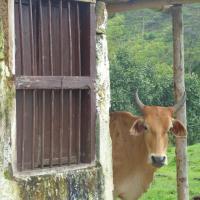Hotel Pictures: El Descanso Del Arriero, Guatapé