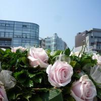 Zdjęcia hotelu: Dream Loft, Oostduinkerke