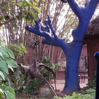 Hotel Pictures: Le Karite Bleu, Ouagadougou