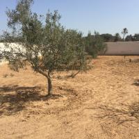 Renovated Djerbian farm