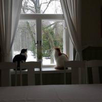 Hotelfoto's: Hostel Panget, Dragsfjärd