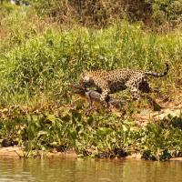 Jaguar House Boat - Pantanal