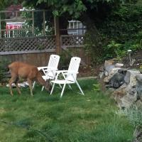 Hotel Pictures: Dolphin Beach Oceanfront Cottage, Nanoose Bay