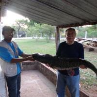 Hotel Pictures: Pousada Caminhos do Pantanal, Pôrto Manga