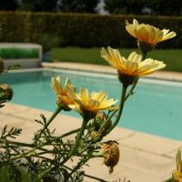 Hotel Pictures: Sentoo Relax, Kruishoutem