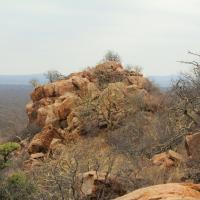 Bivack Bush Safari