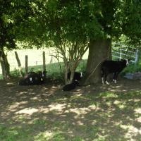 Photos de l'hôtel: Xhawirs Horse Farm, Soumagne
