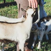 Hotellbilder: Medny Dvor Farm Stay, Medna