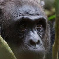 Hotelbilleder: Olifant en Chimpansee, Lingerhahn