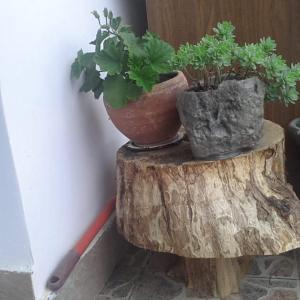 Hotellikuvia: Guesthouse Sveta, Dilijan