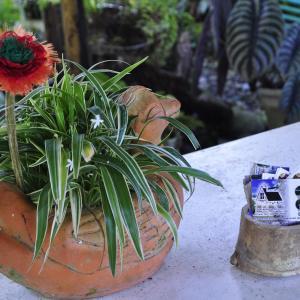 Hotel Pictures: Cabaña Samay, Pepino