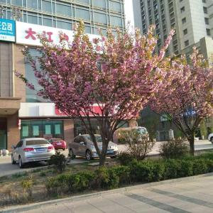 Hotel Pictures: Shan Ding Apartment Dalian, Dalian