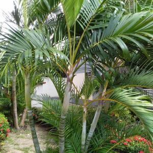 Hotel Pictures: Condomínio Vitale Residence, São Luís